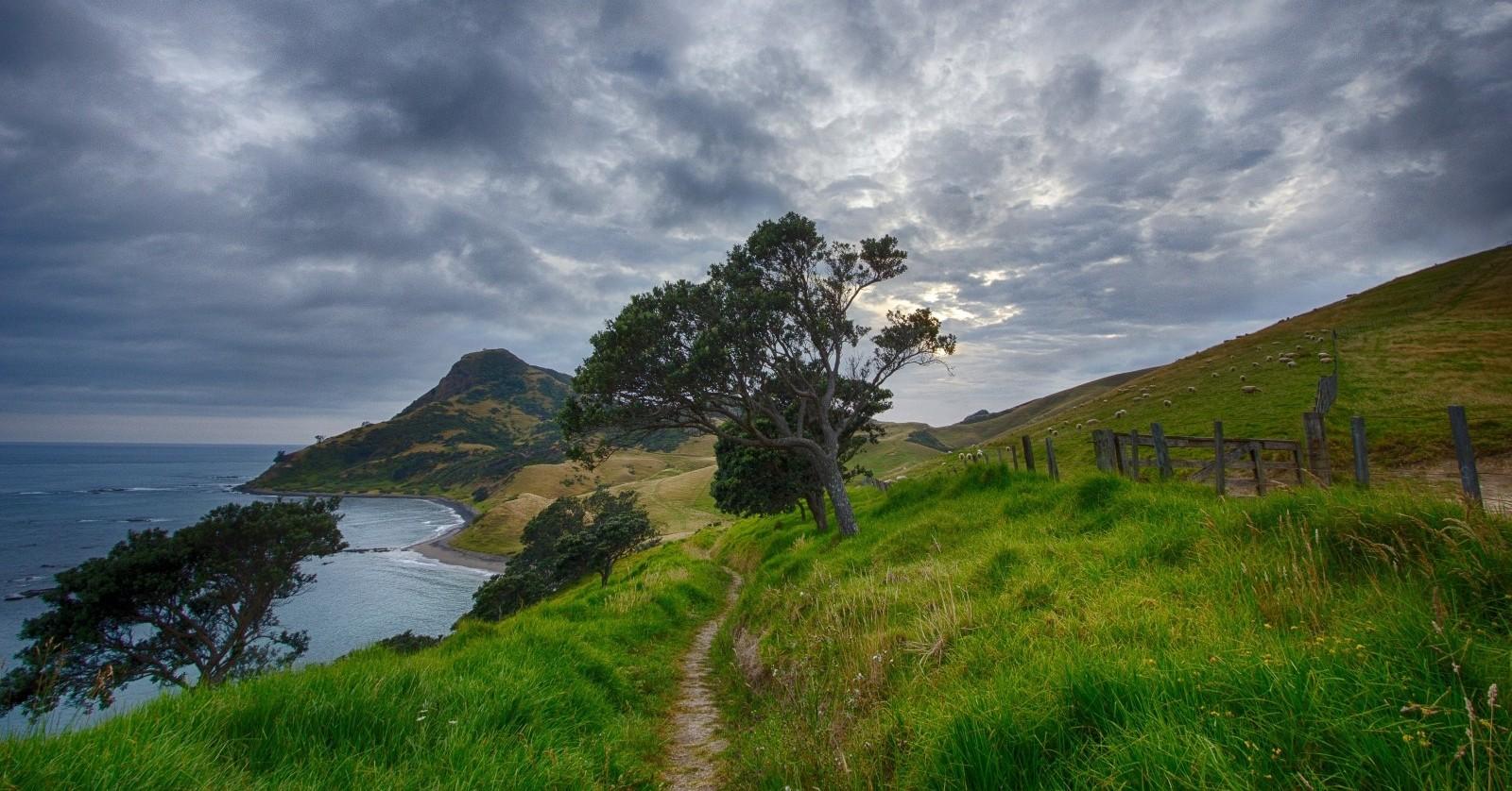 new-zealand-path-trail-corum-andel-sheep-hiking